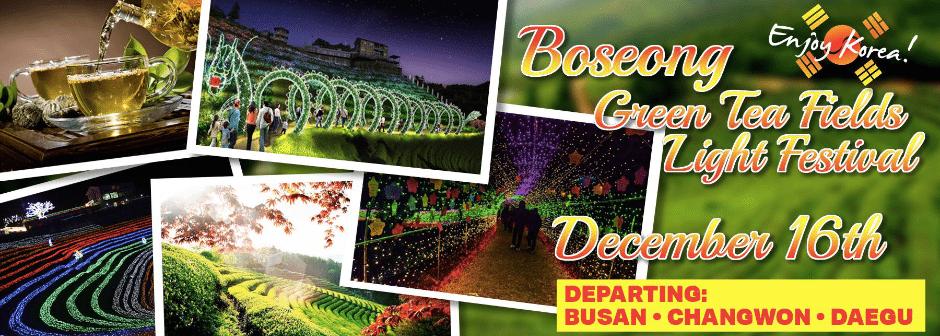 Boseong Green Tea Fields Light Festival 2017 (Day Trip)